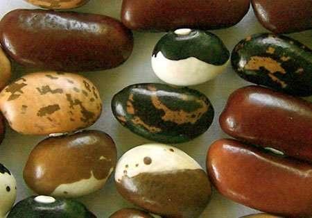 grow_beans